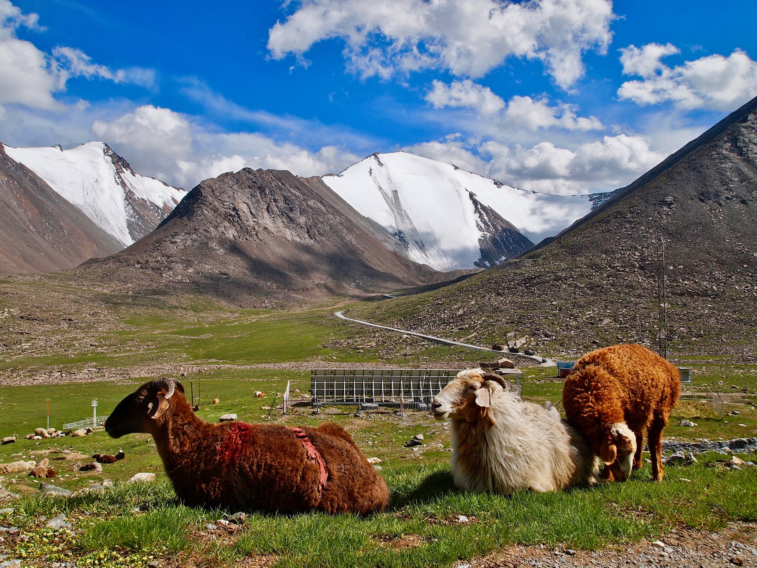 Animals grazing in summertime on land that used to be covered year round by the Tianshan Number 1 Glacier in Xinjiang, China. Photo: (C) Remko Tanis