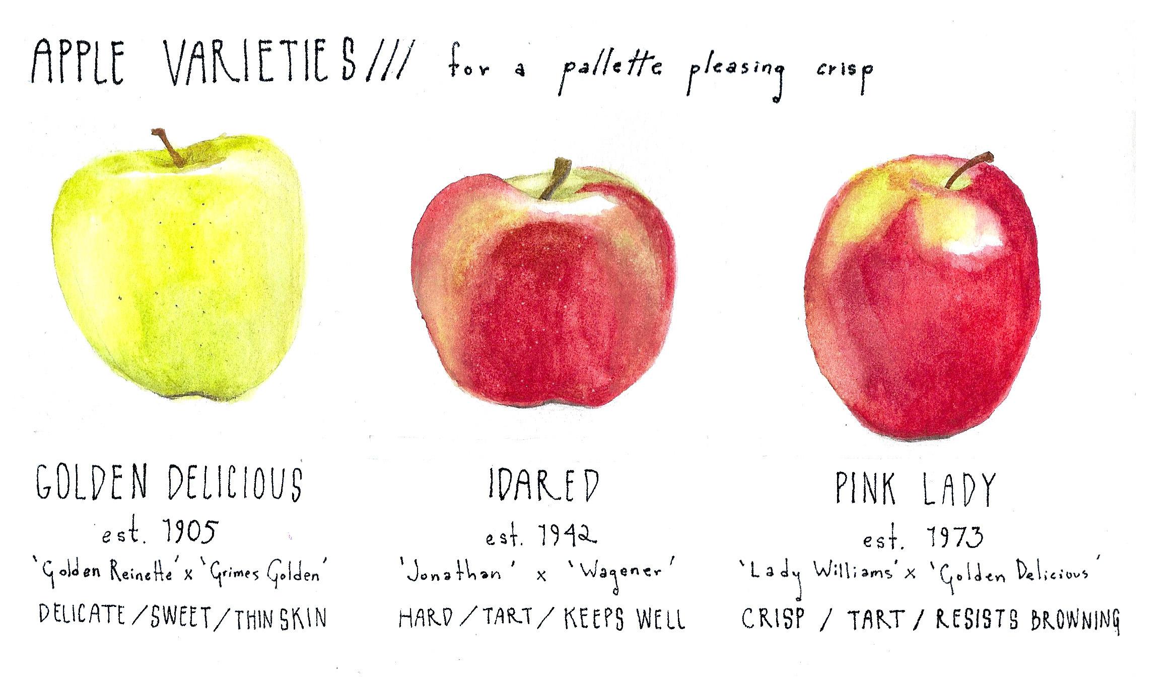 apple crisp_sketch.jpeg