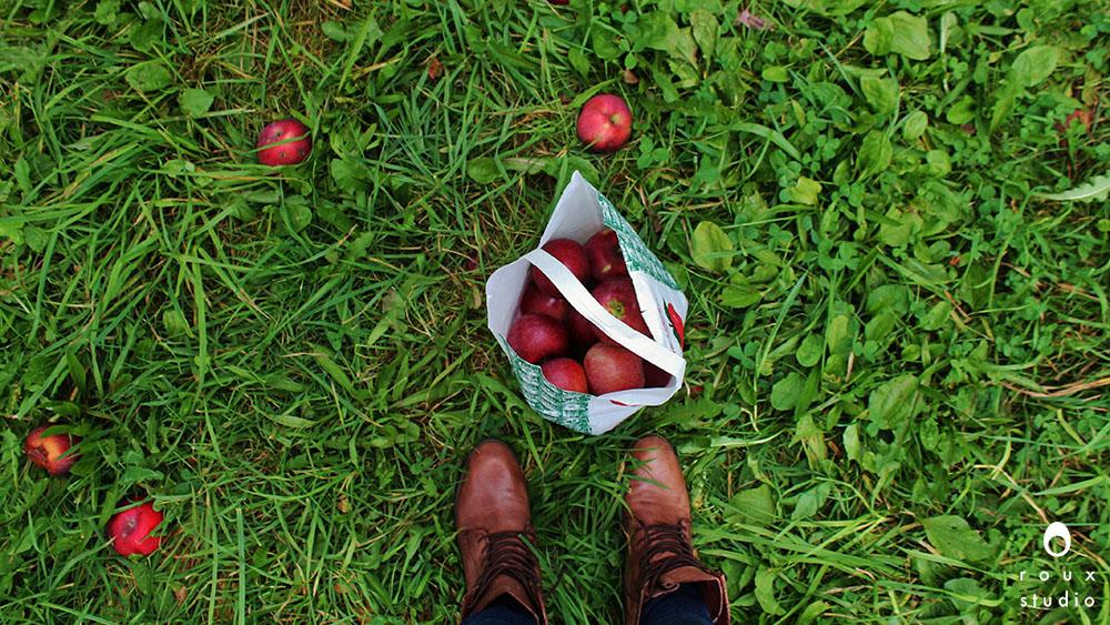 apple picking  ithaca, ny | september 2013