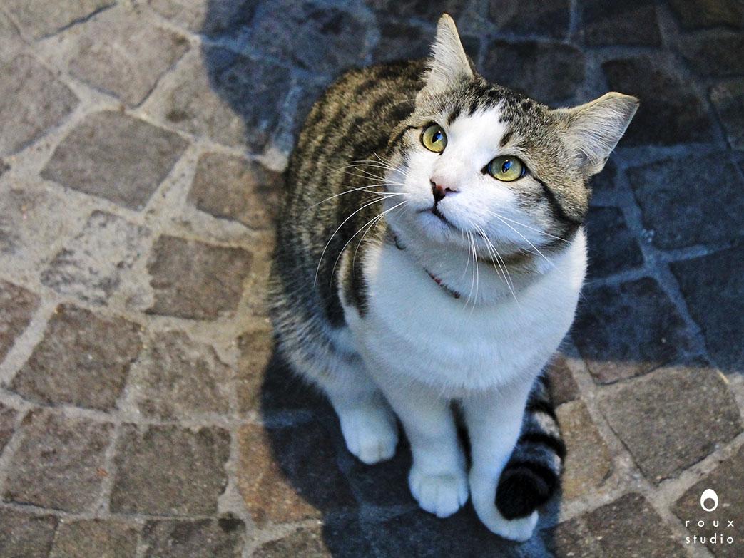 street kitty  annecy, france | december 2013
