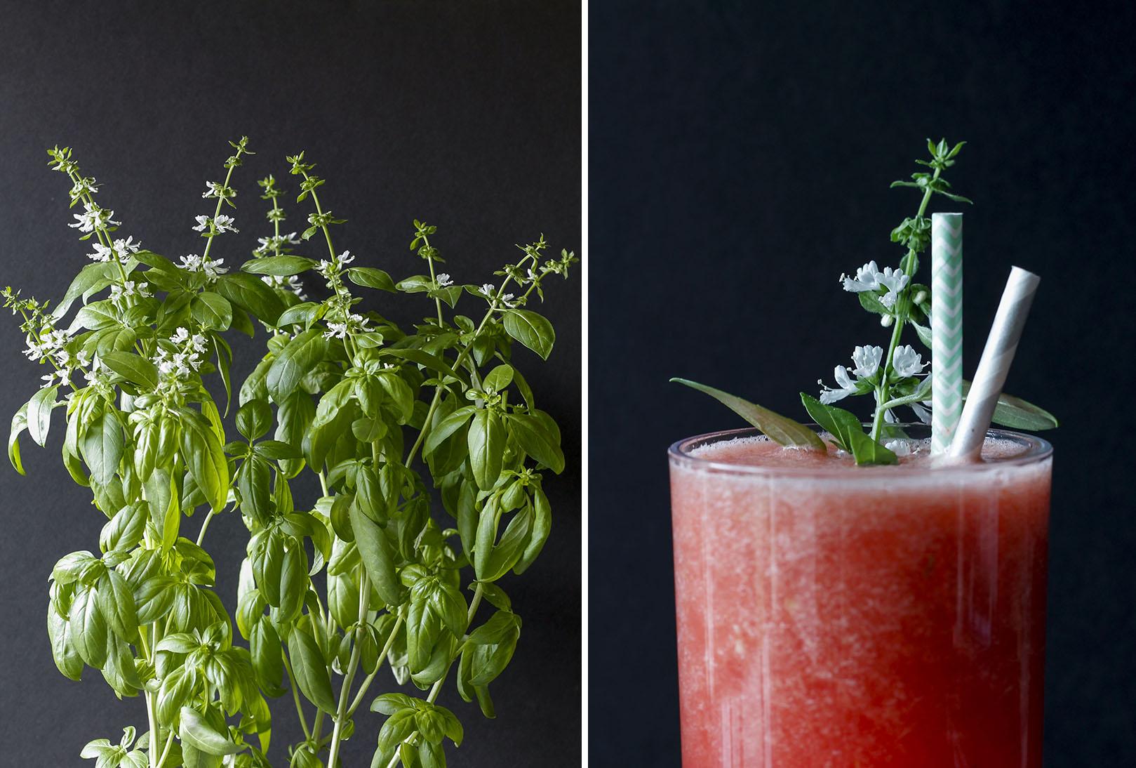Spicy Watermelon Juice with Basil Sprig | roux studio