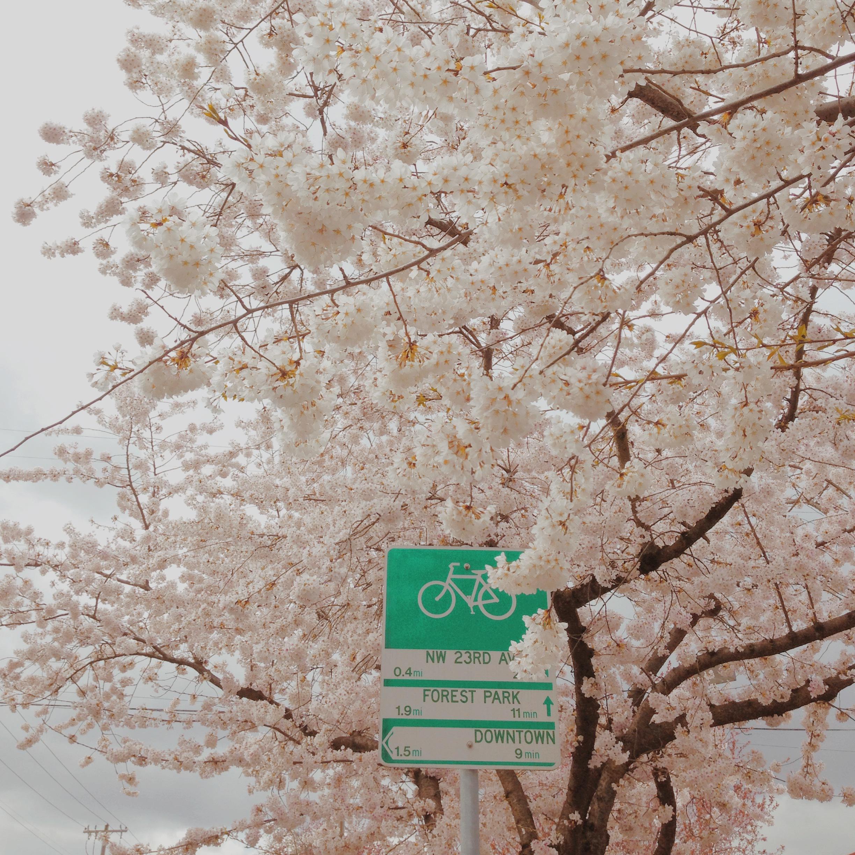springtree.IMG_2795.JPG