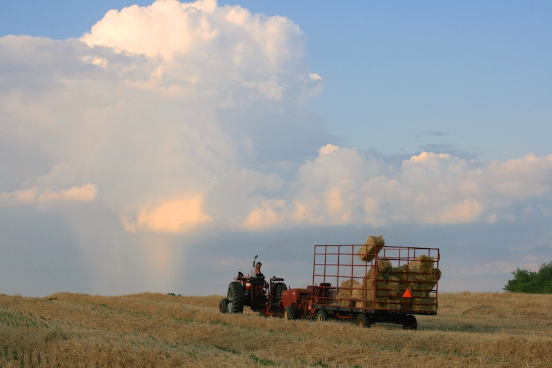 Summer Evening Bailing Hay