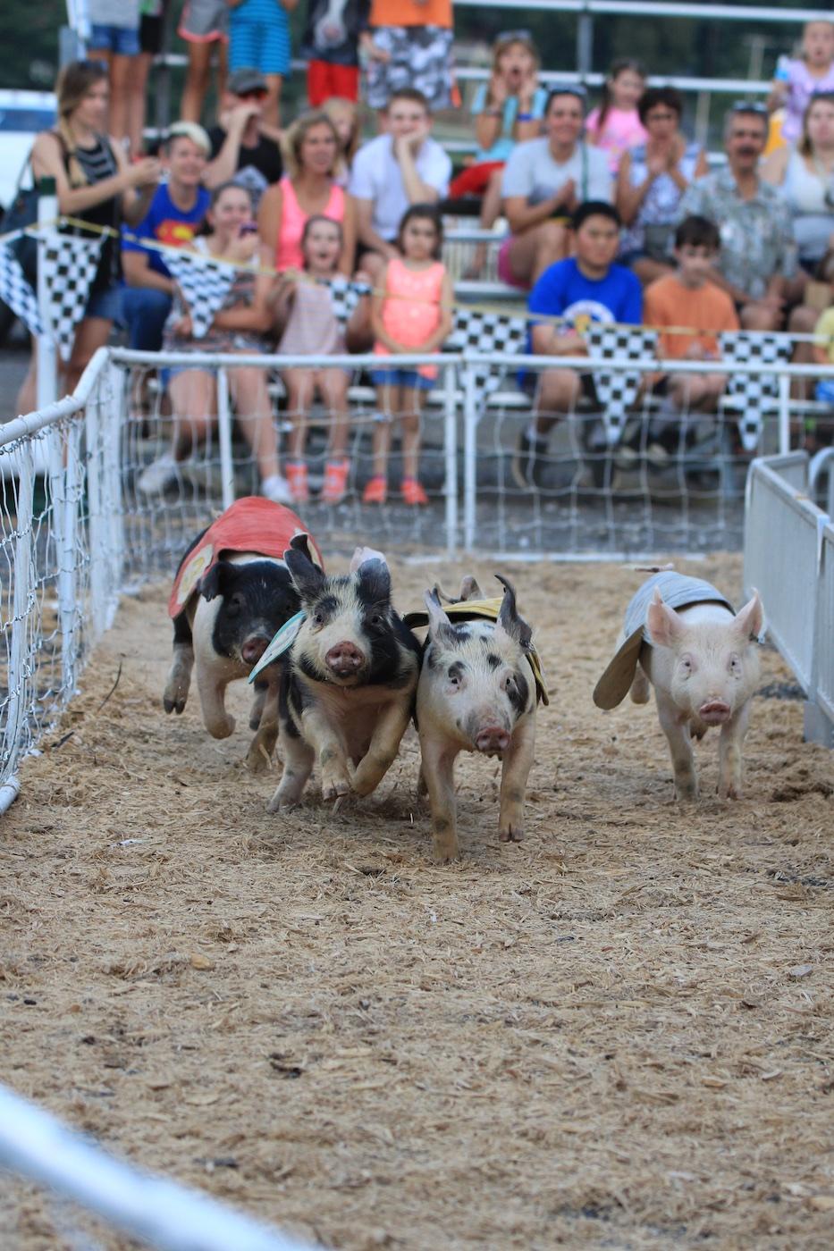 Pig Racing at the County Fair