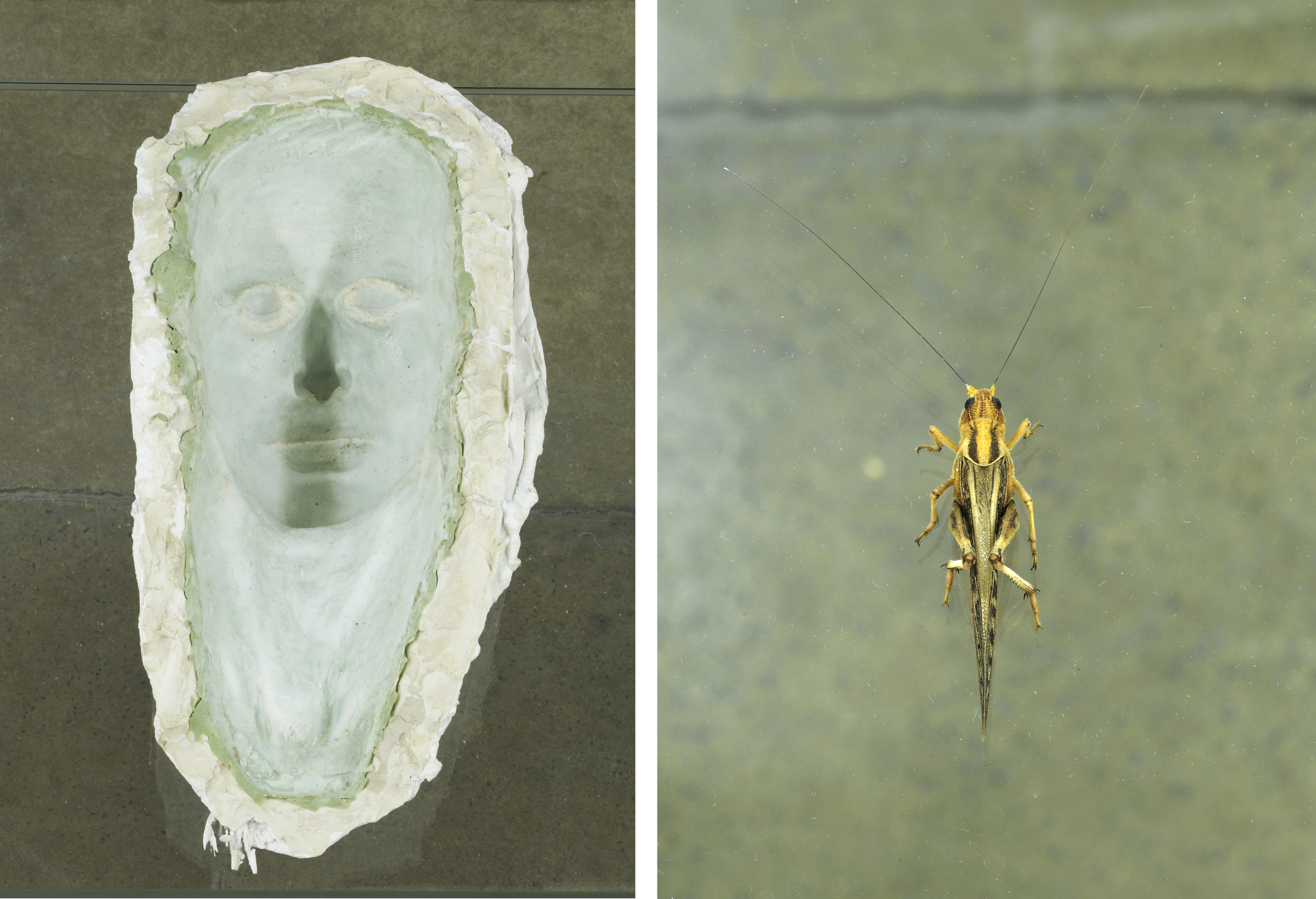 Untitled Vitrine   2012   Plastic anatomical model, silicone mould and plaster cast of a death mask, grasshopper with human hair antennae, glass vitrine   92 x 57.5 x 170 cm / 36.2 x 22.6 x 67 in