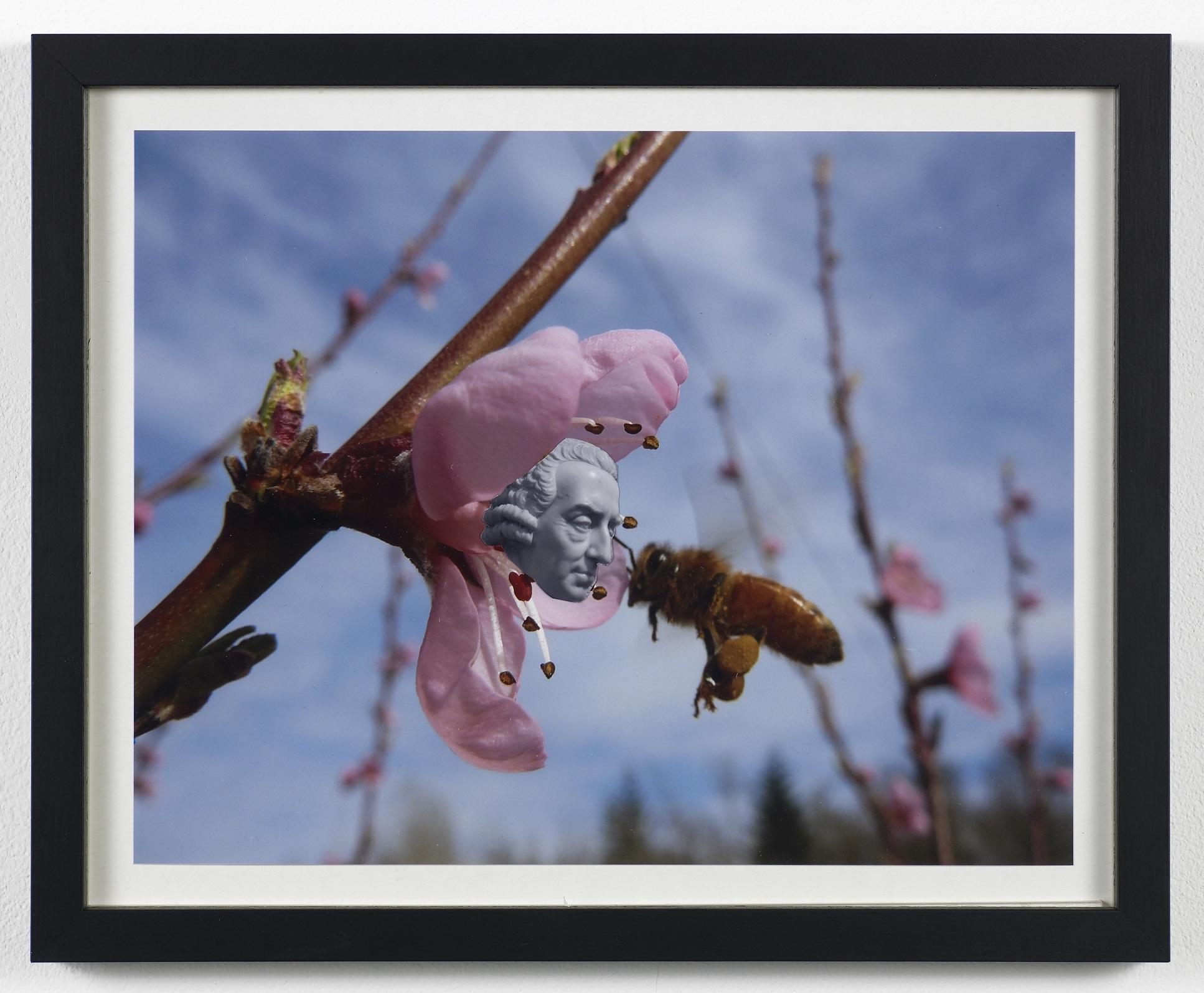 Untitled (SmithFlower) 2009 Photo collage 26.3 x 32.3 cm