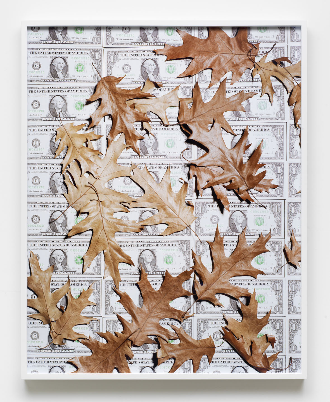 Leaves 2016 Archival pigment print, framed 97.2 x 77.2 cm / 38.2 x 30.5 in