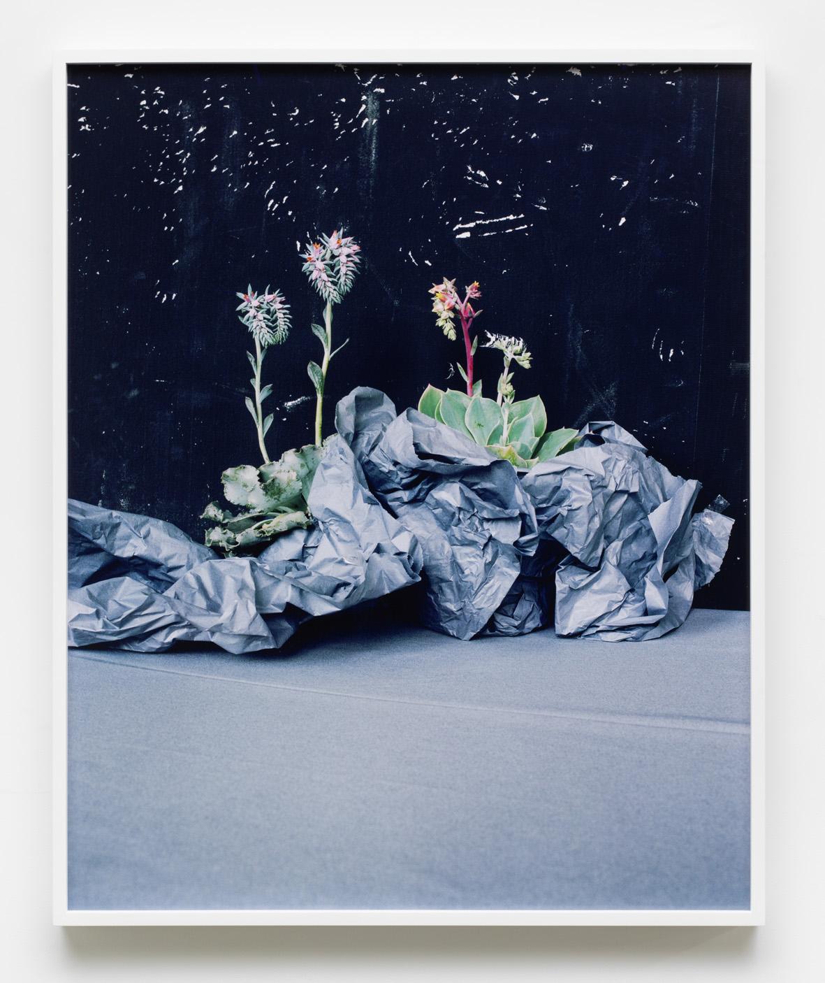 Desert Plants 2016 Archival pigment print, framed 86 x 70 cm / 33.8 x 27.5 in