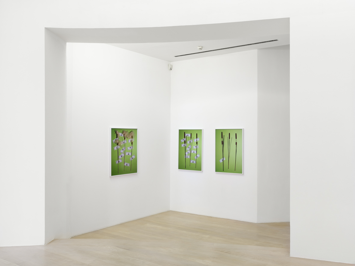 Leaves  Installation View  Kestnergesellschaft, Hannover, DE  2017