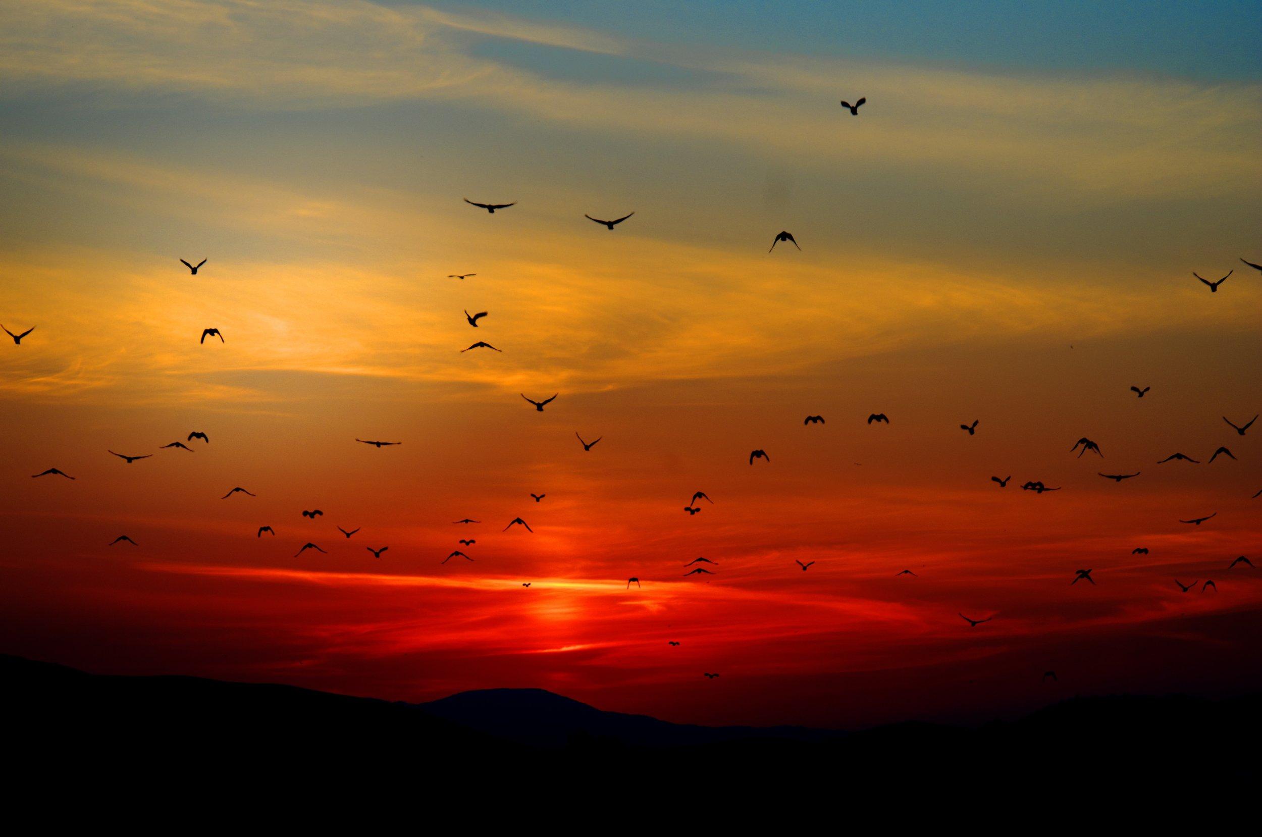 sunset-birds-flying-sky-70577.jpeg