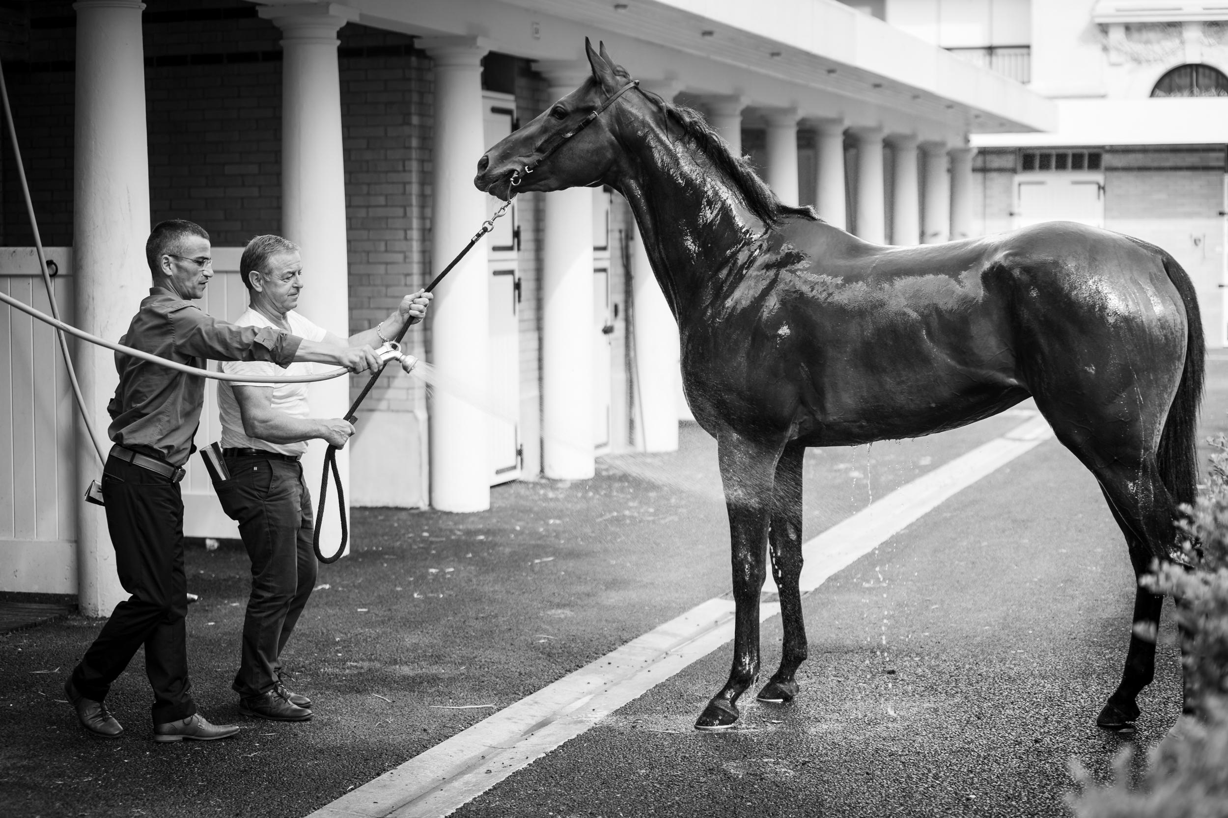 Prix Juddmonte 2018 © Florian Léger - SHARE & DARE-34.jpg