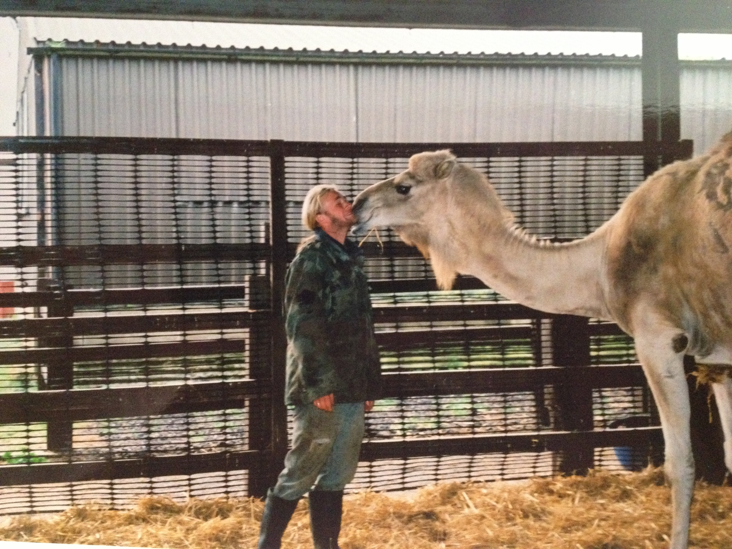 Getting a kiss from Topsy the camel!