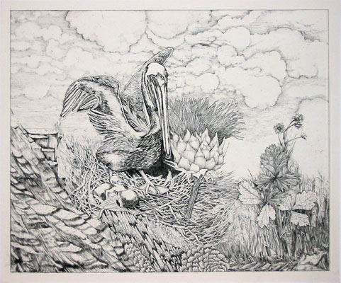 Untitled (pelican)