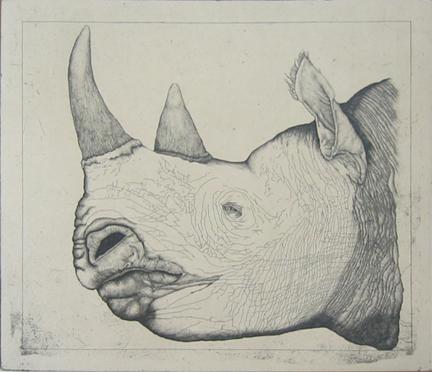 Untitled (rhinoceros)