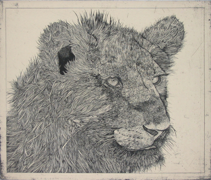 Center Street Studio is pleased to announce the release of 'Untitled,' a portfolio of ten exquisitely drawn animal head etchings each printed with chine collé. Ten years in the making, this collection of prints represents Whitman's first foray into etching. The extraordinary draftsmanship found in his graphite drawings is evident in each of these prints, especially in the graphic ingenuity displayed in translation of surface texture and fur. Printed in editions of 20, image size is 11.75 x 14 inches, sheet size is 20.5 x 22.5 inches.  Click here  to see images of the entire portfolio,