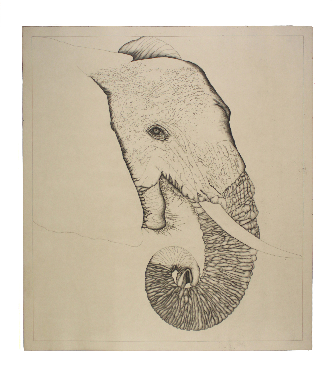 Untitled (Elephant)
