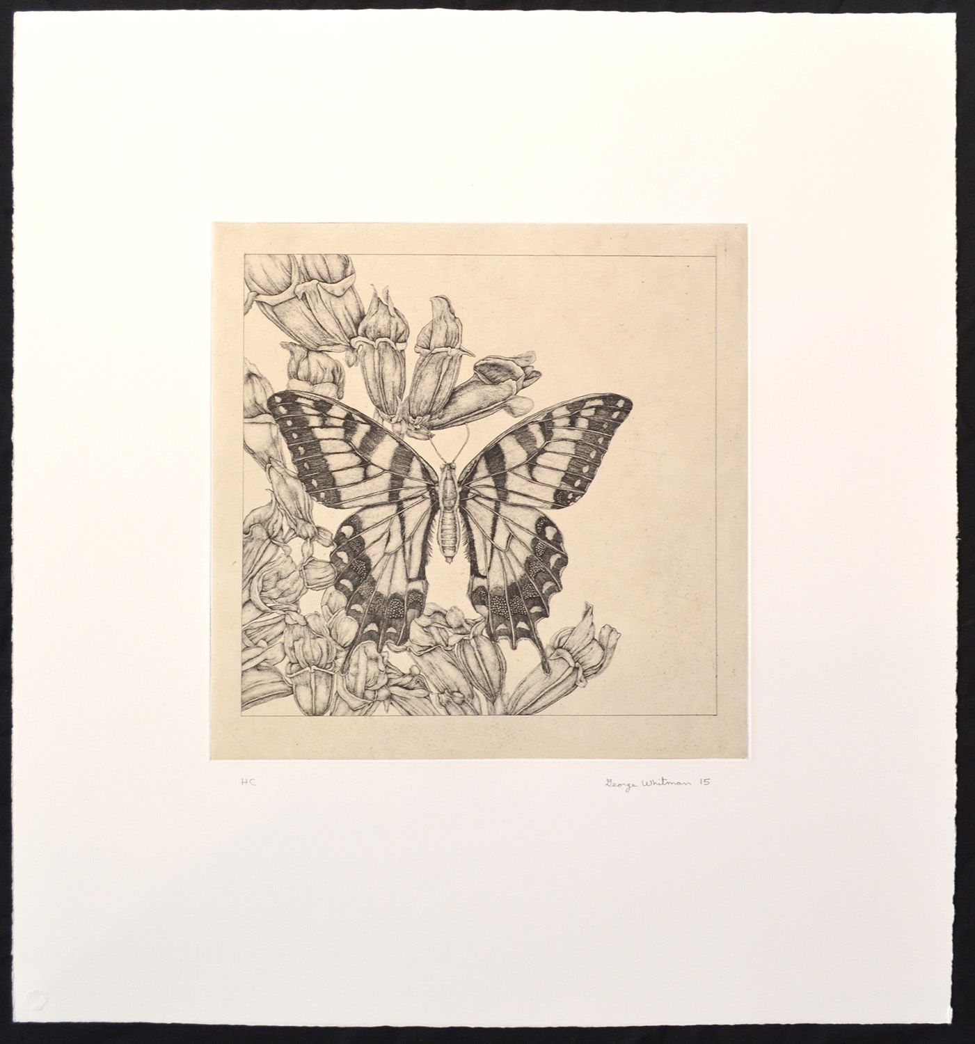 untitled (butterfly 1)