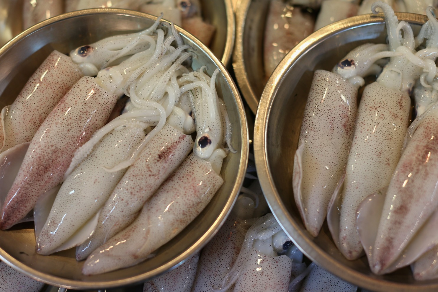 Raw squid is sold at market. This is the first time researchers have discovered an antibiotic-resistant bacteria in food. (Cameron Spencer/Getty Images)