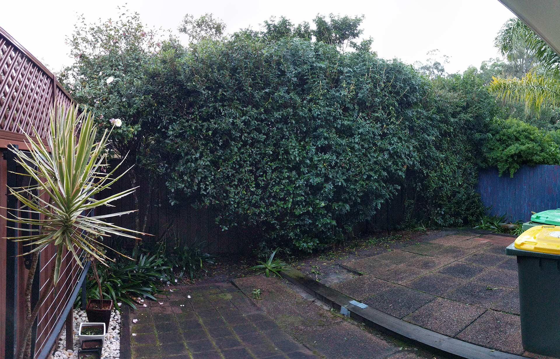 Backyard_Before_1920.jpg