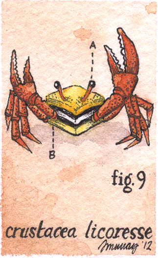 crabcrop.jpg