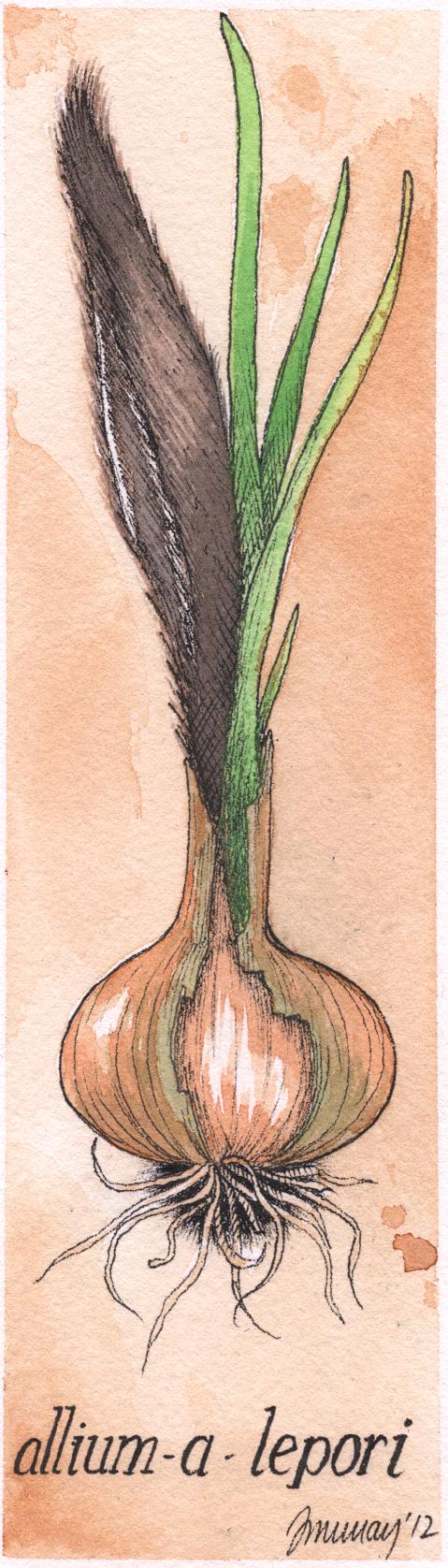 rabbitcrop.jpg