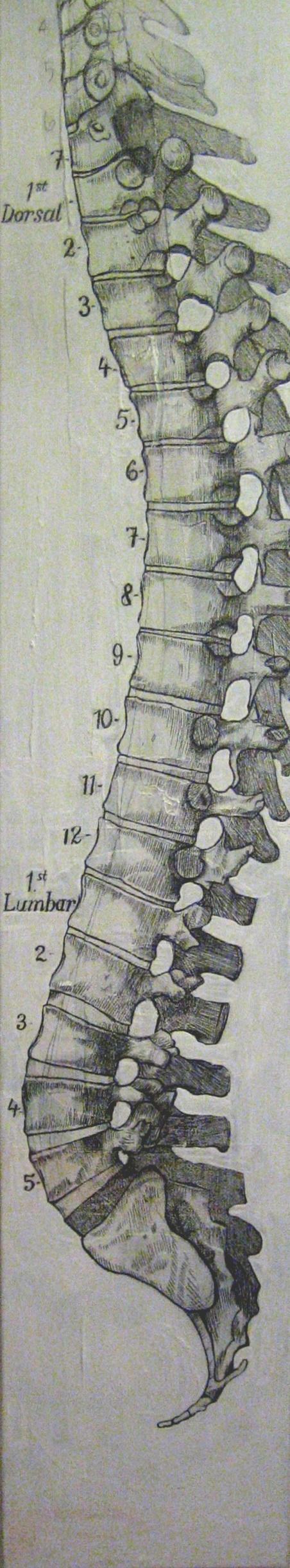 Full Spine