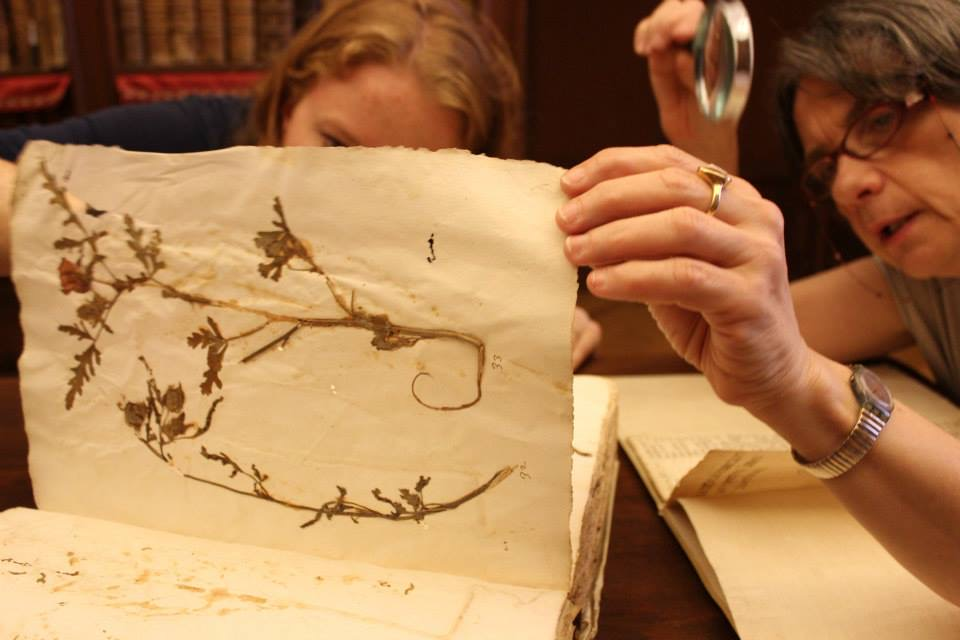 A 16th century Italian Herbarium at the Biblioteca Angelica in Rome.  Photo by Daniel Phillips