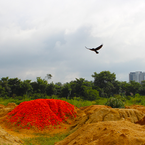 Suparichit Pile Study (No.1)   Seeding new perceptions and possibilities amid the marginalized landscapes of Bangalore.