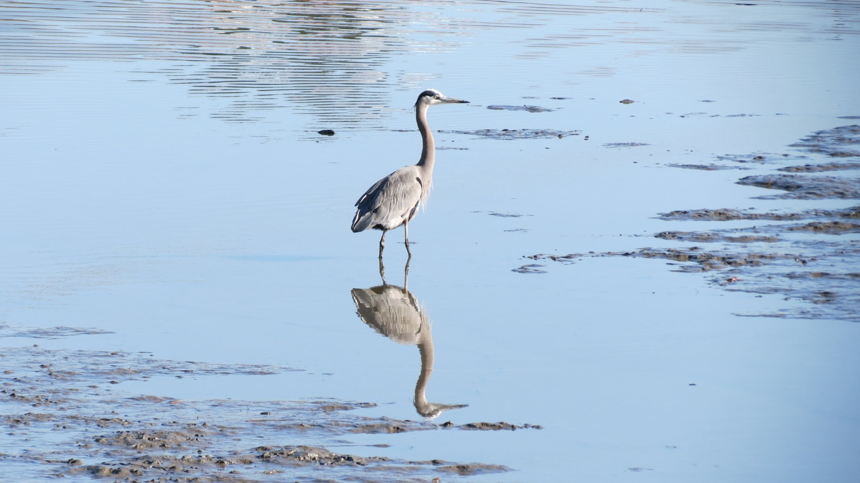egret-watshed-guide.jpg