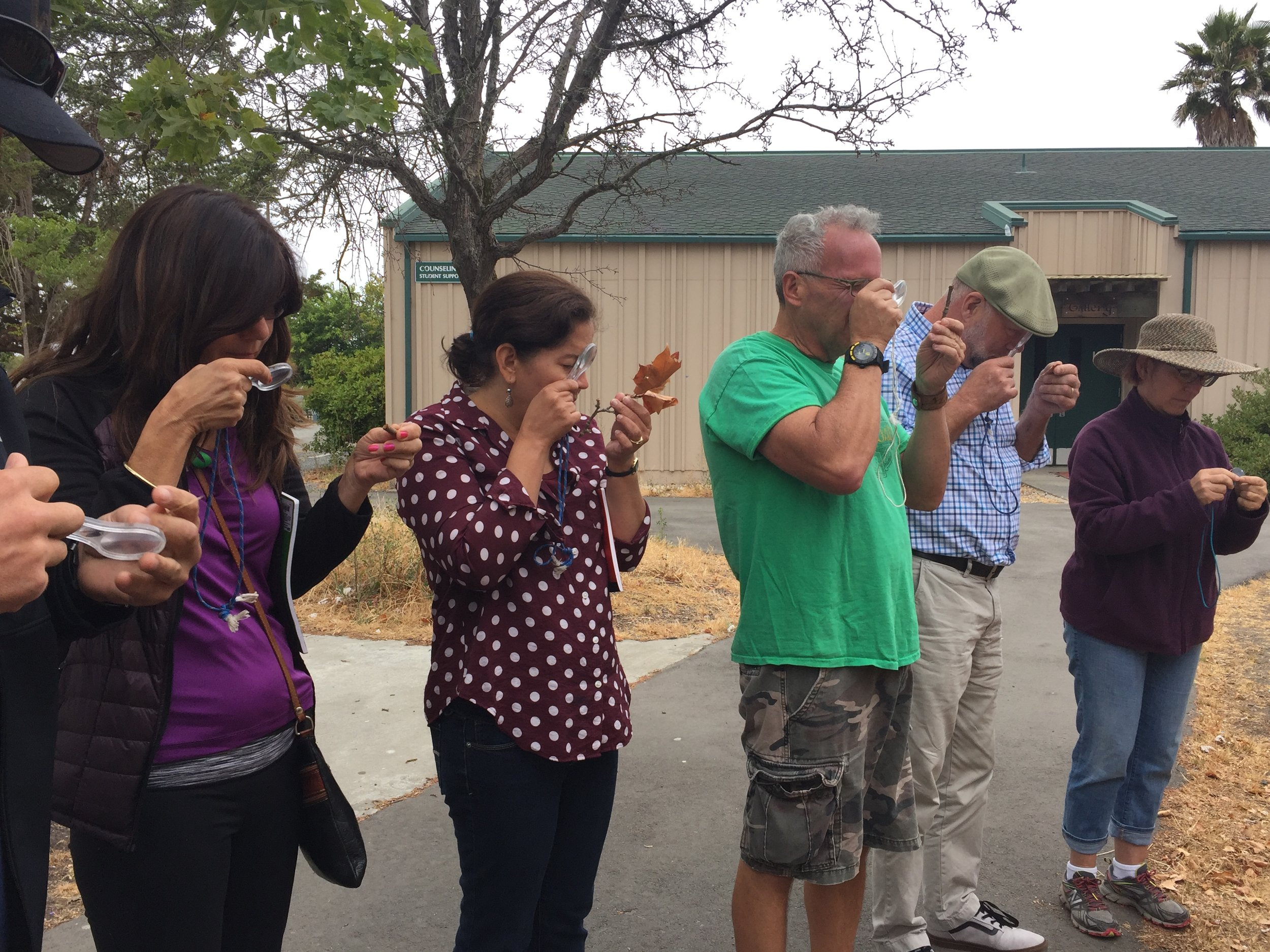 Attendees at the 2016 BEETLES training closely examine leaves as part of an outdoor education exercise.