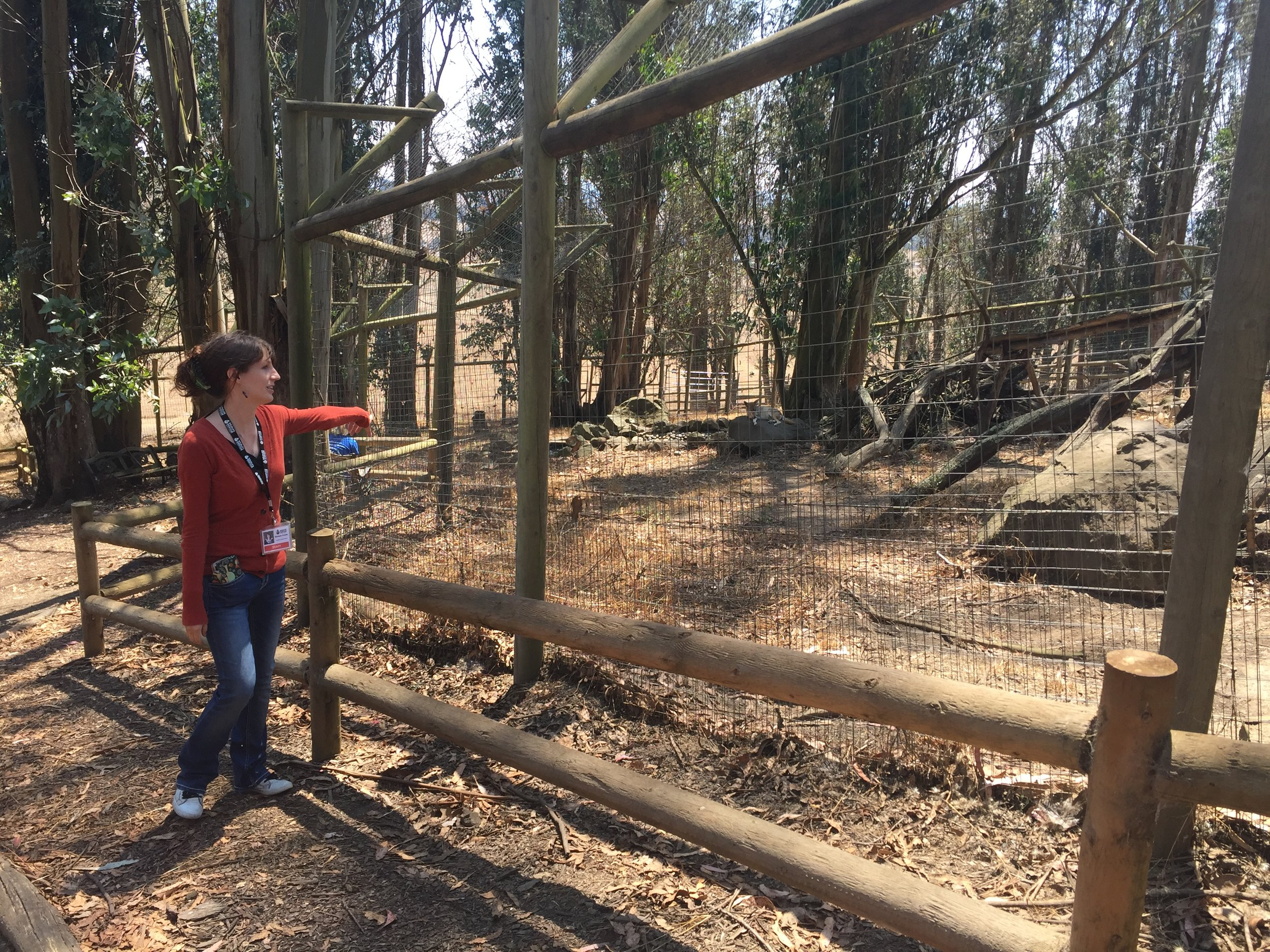 Education Outreach Director Michelle Fowler shows educators the coyote enclosure, asking everyone not to howl at the residents.