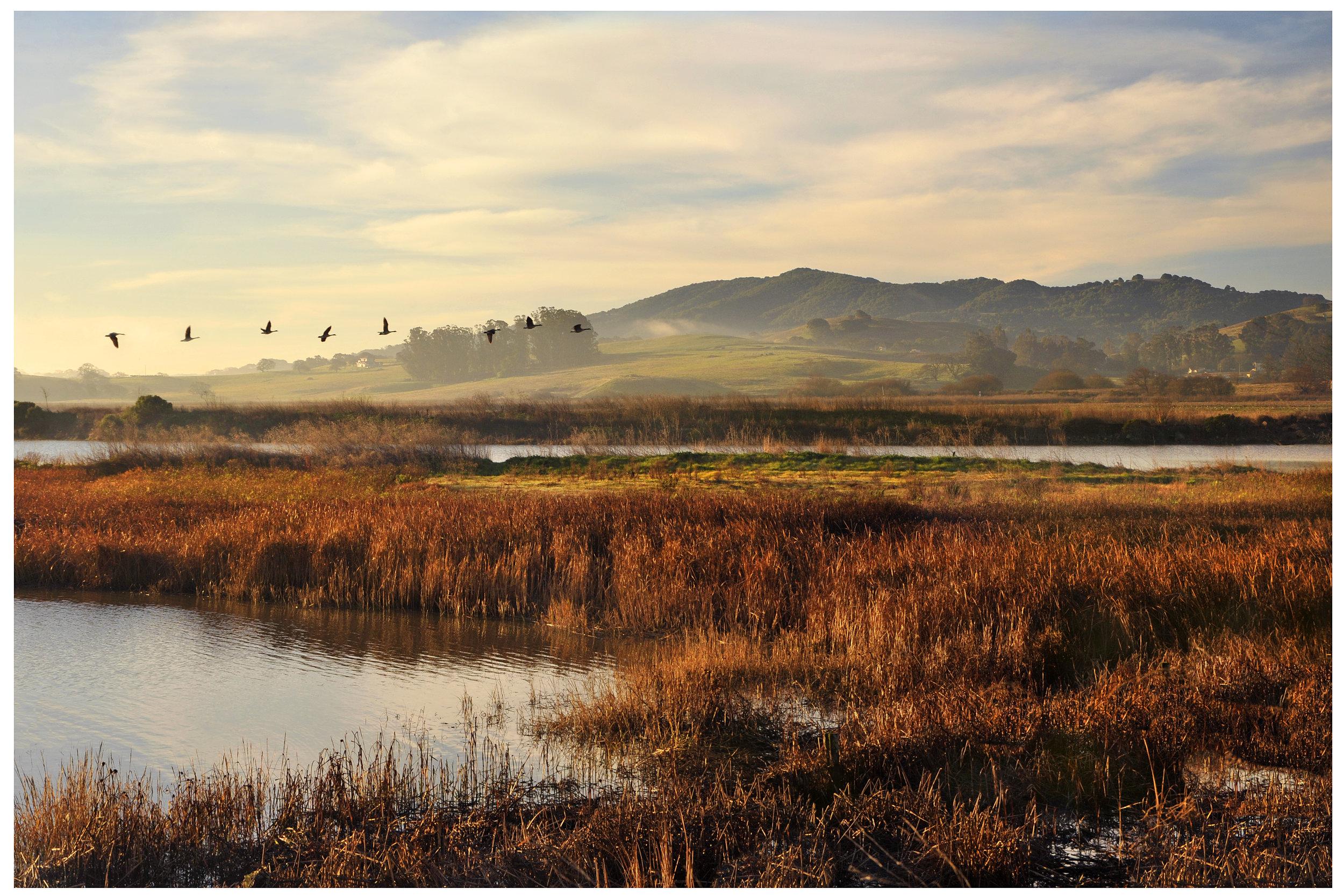 The Petaluma Marsh, photo by Scott Hess