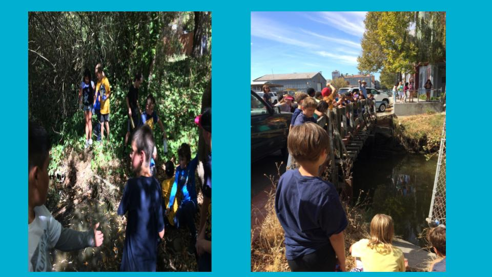 Later, we explored different sections of Thompson Creek and traced its route to where it meets the Petaluma River. Mr. Norstad's class even took a long walk to find its source!
