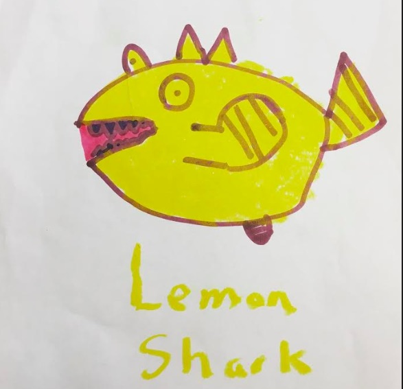 lemon-shark.jpg