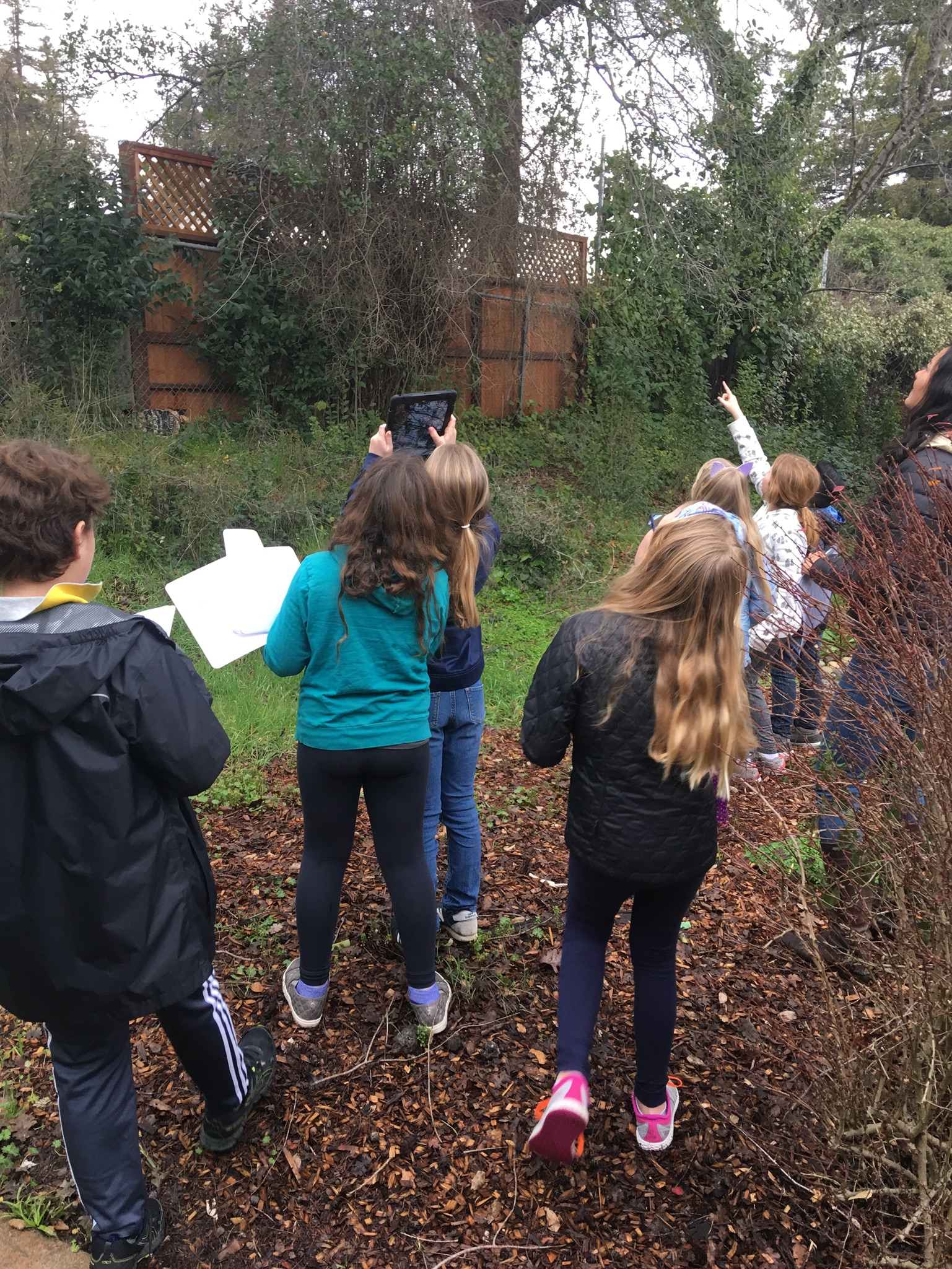 McNear students take pictures of local plants. They will use these images later to identify and document the trees, flowers, shrubs, and fungi growing on their campus.