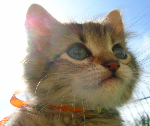You'll NEVER guess what happened when Marissa saw this cat!!!!!! Spoiler: she died and went to heaven.