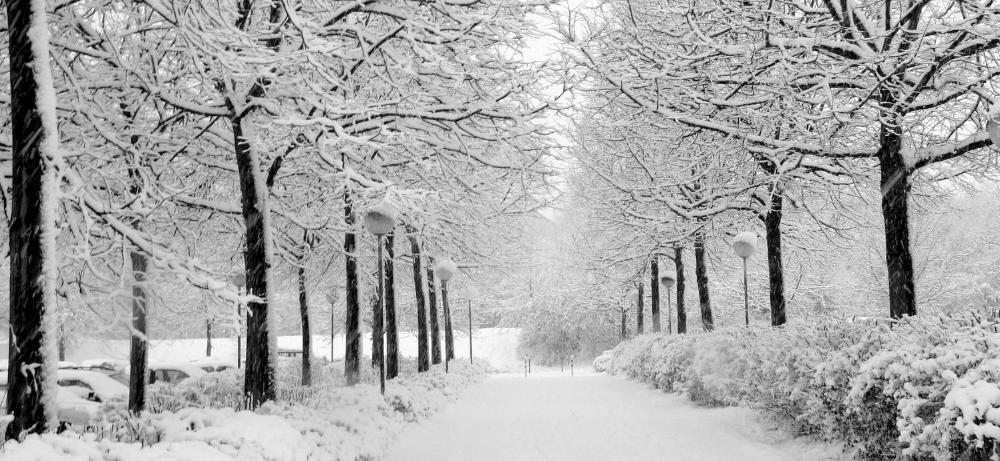 winter .jpg