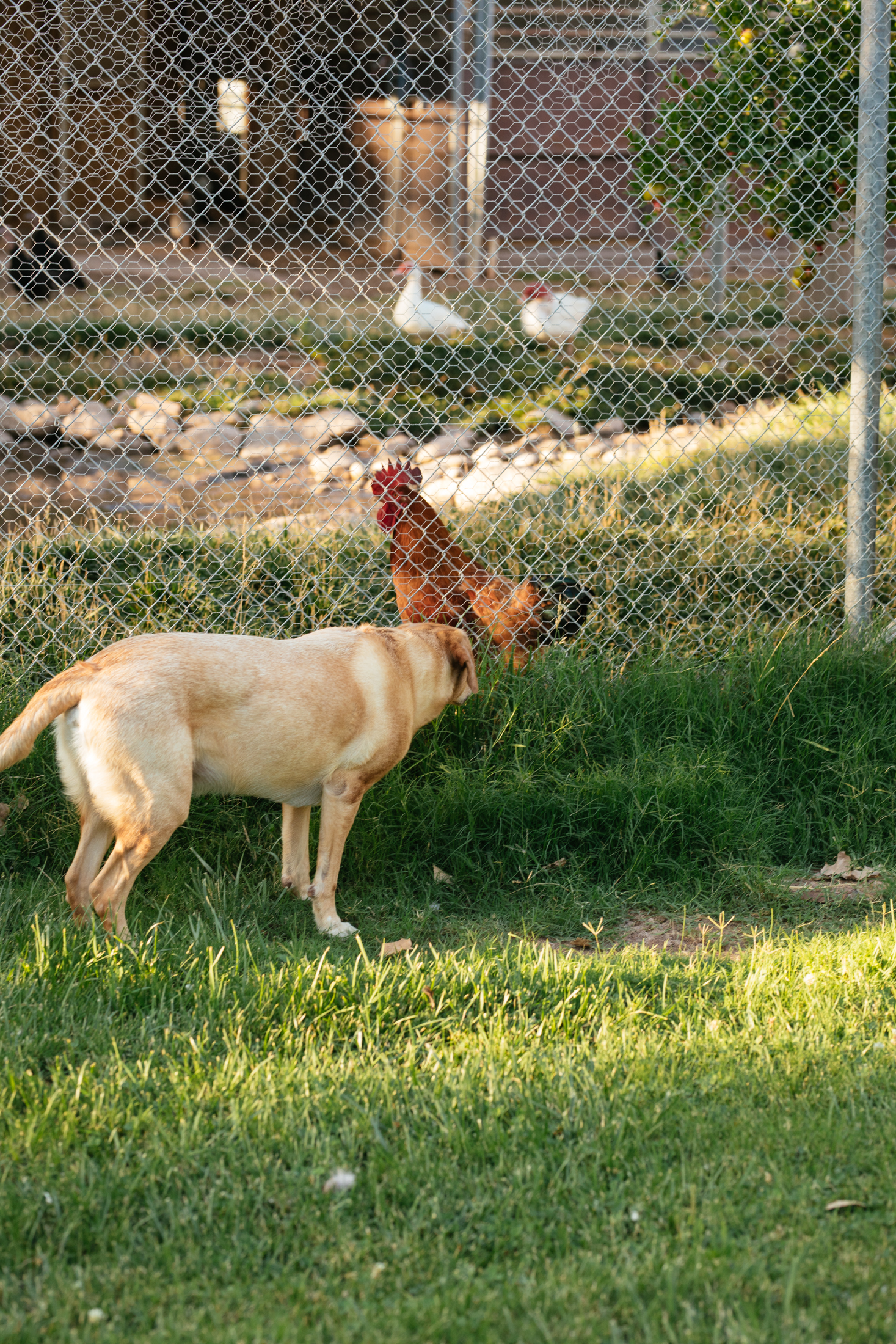 Bruce trying to befriend Mr Rooster