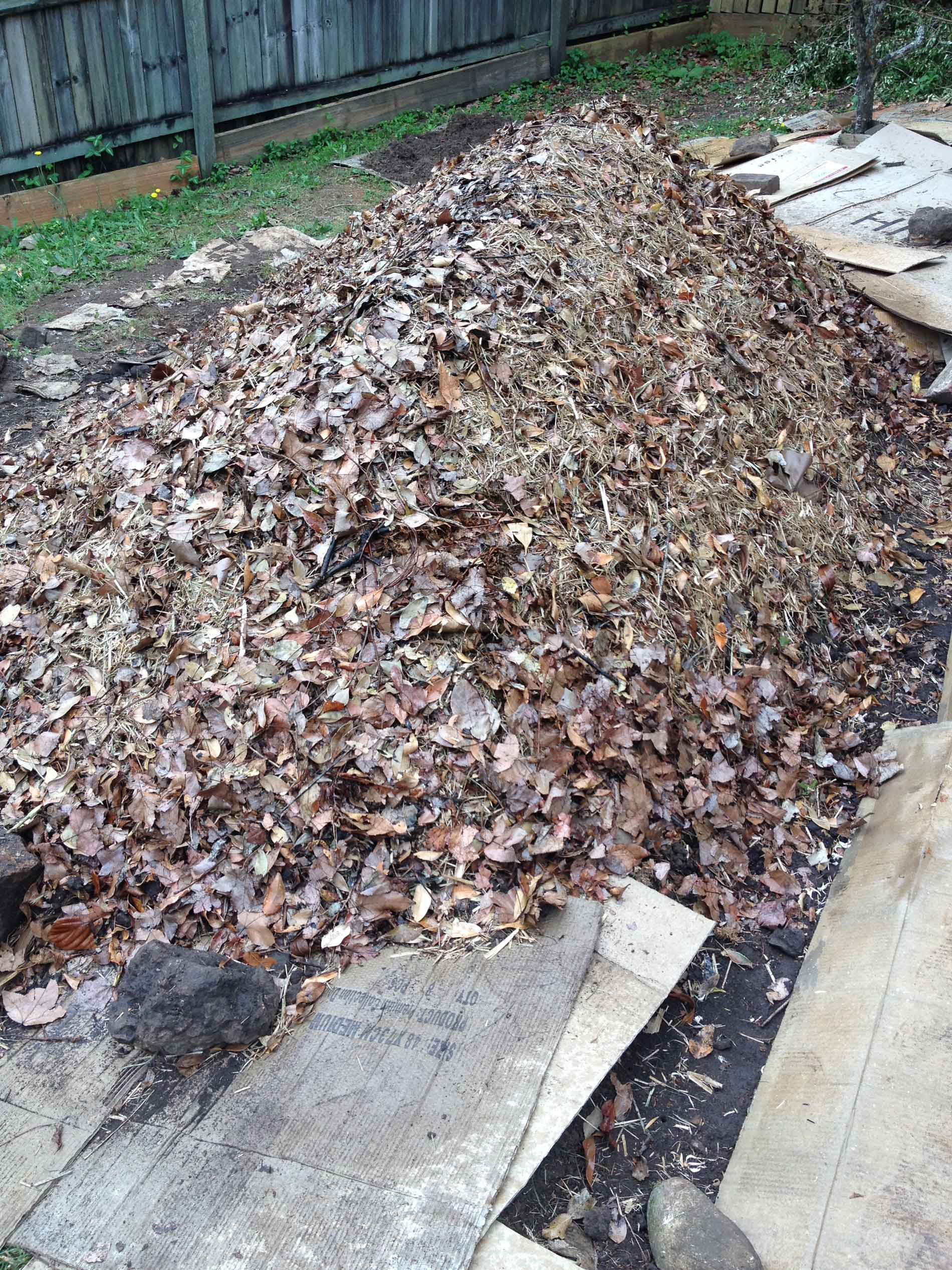 Leaf mulch added to mound, ready for planting.