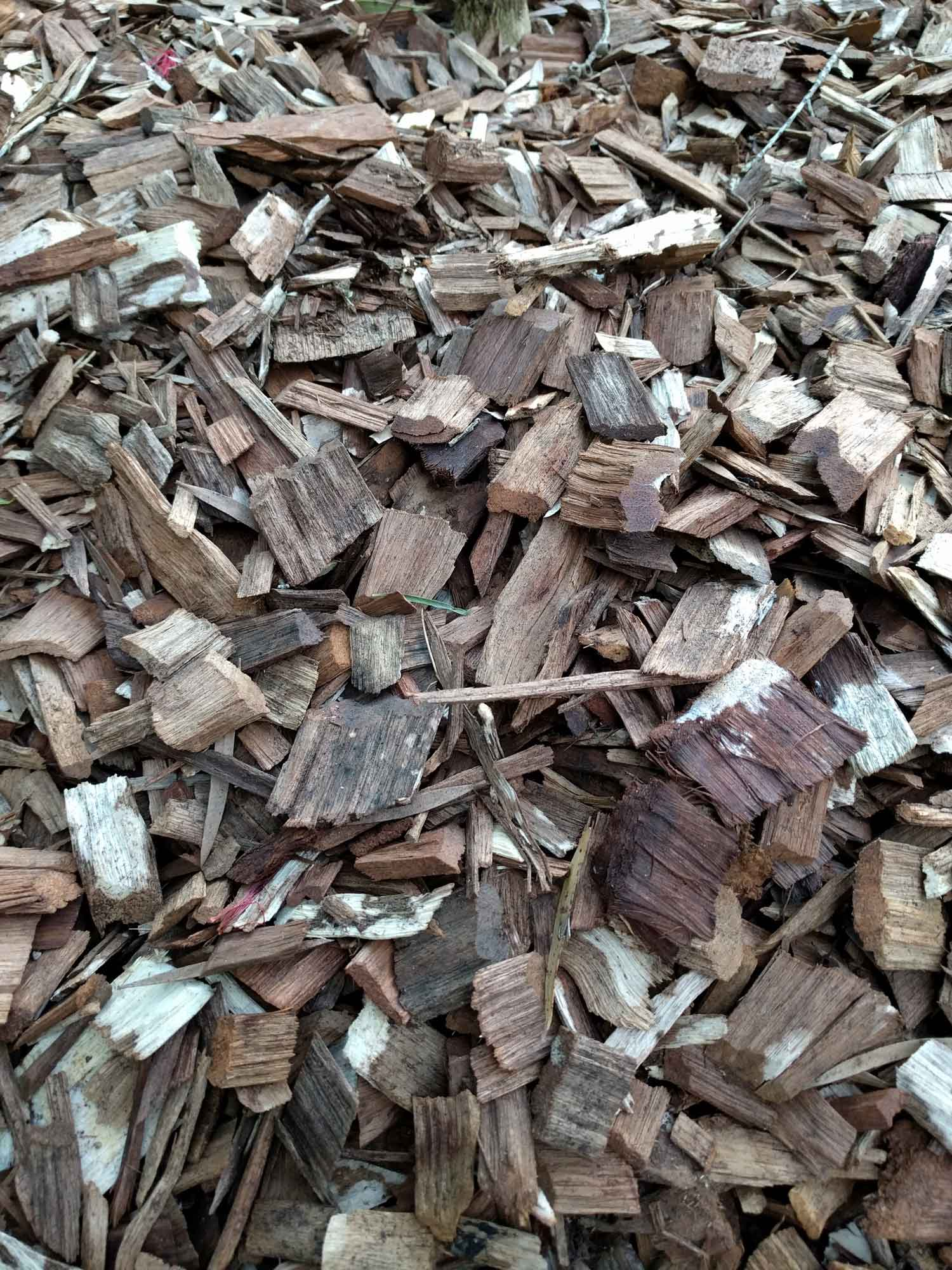 Ideal ground cover mulch: Chunky hardwood chip.