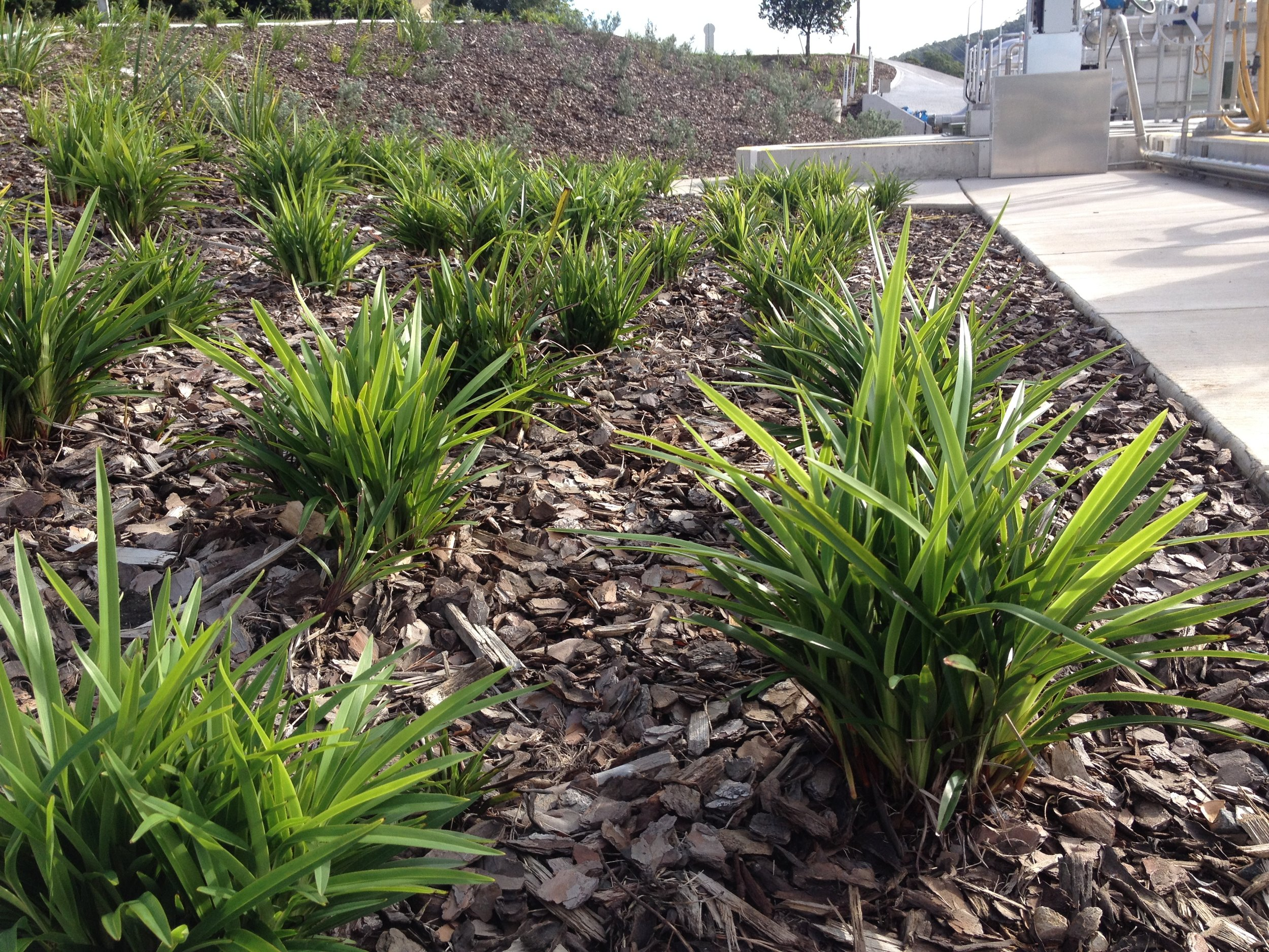 UnityWater Sewage Treatment Plant Landscape Design.JPG
