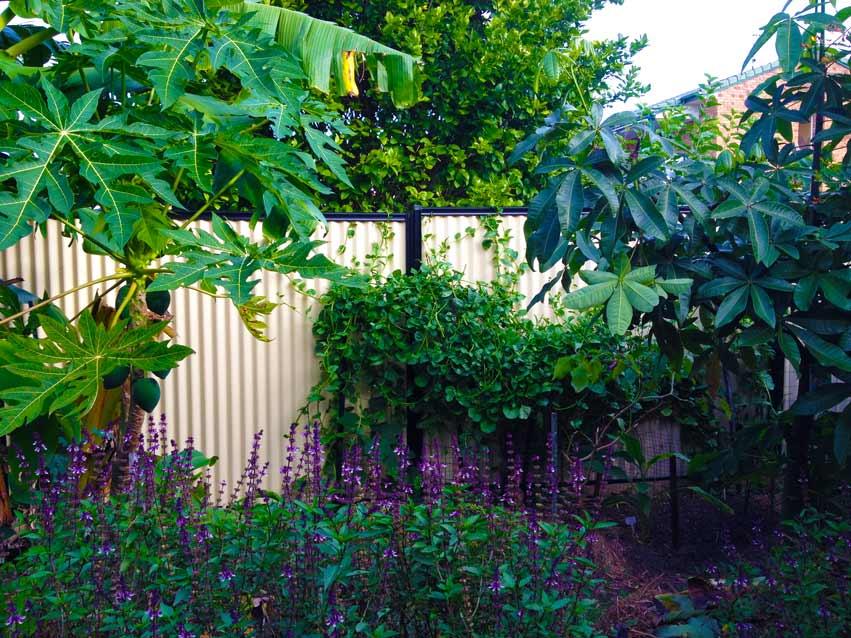 Edible Garden Design Carolyn.jpg