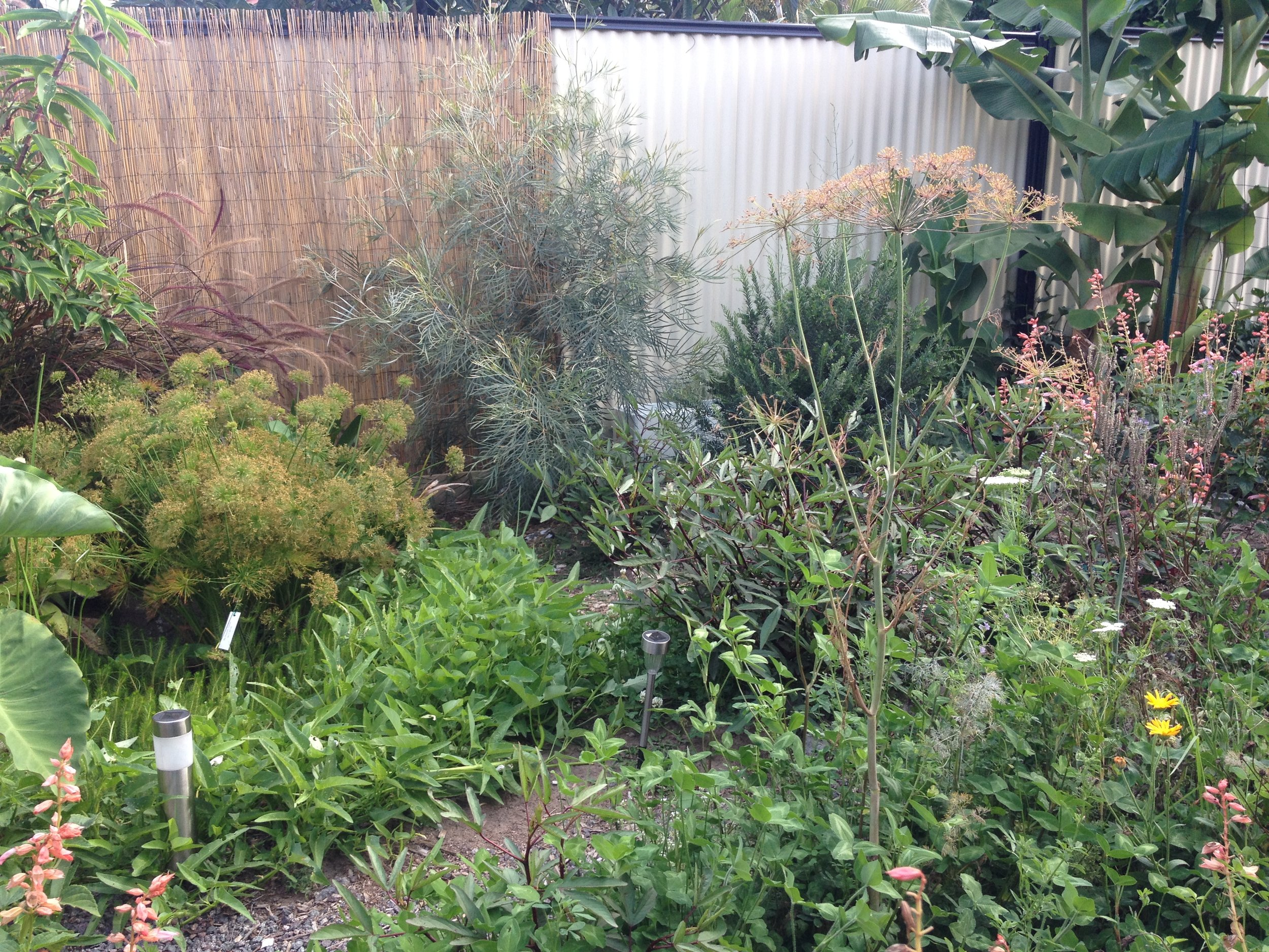 Edible Garden Australian Native Plants.JPG