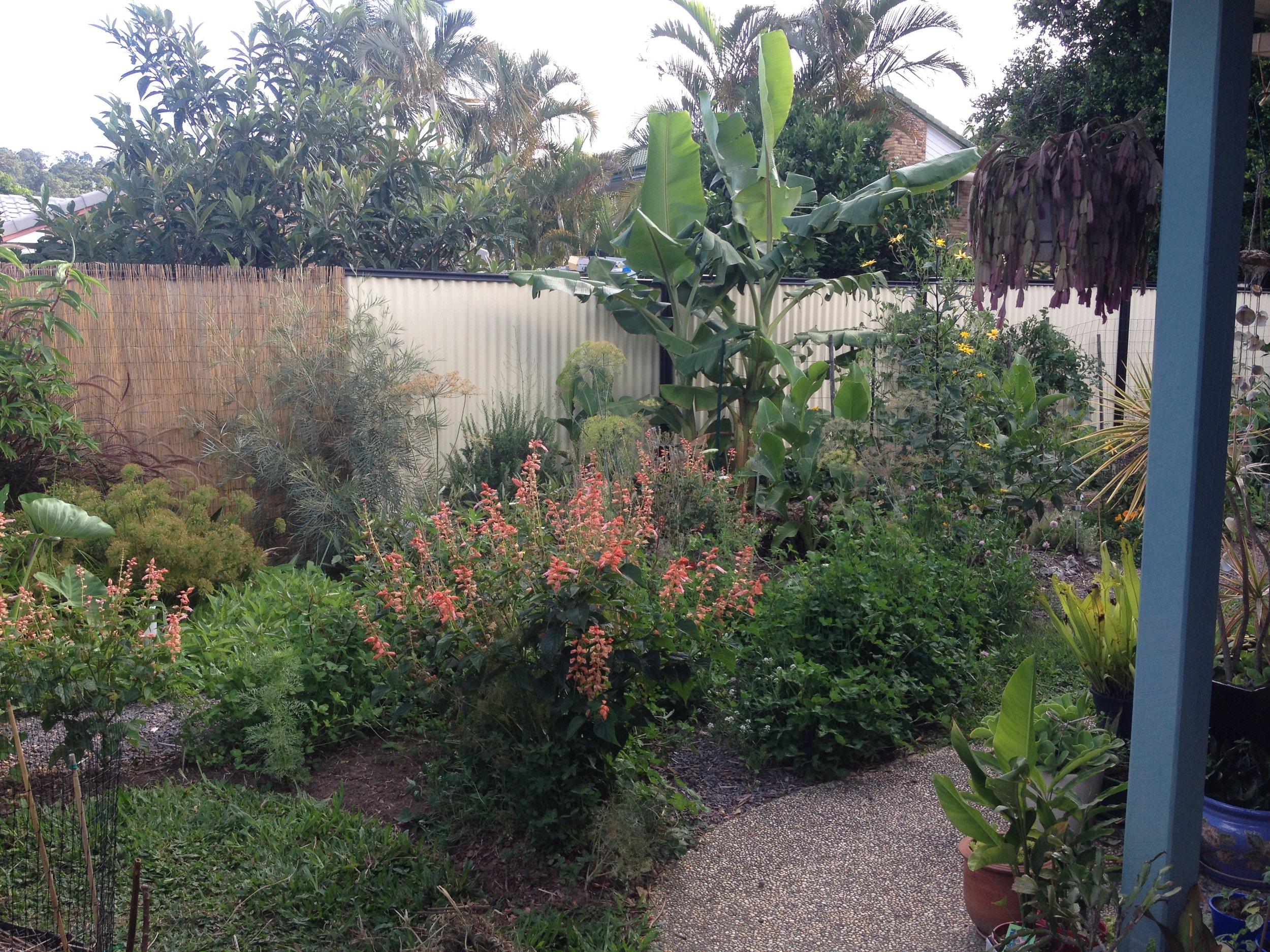Carolyns edible garden wide view.JPG