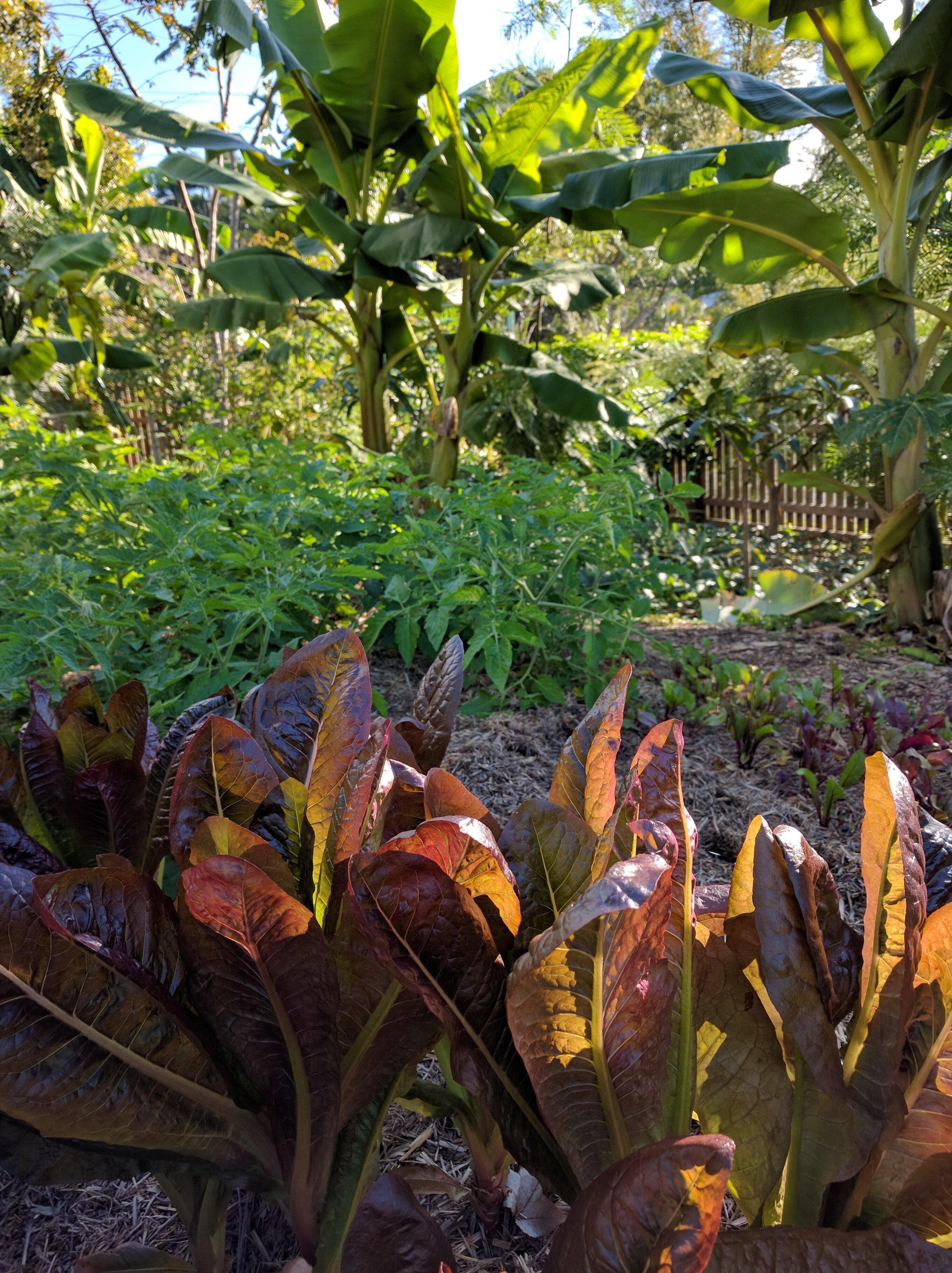 Nambour Edible Garden -