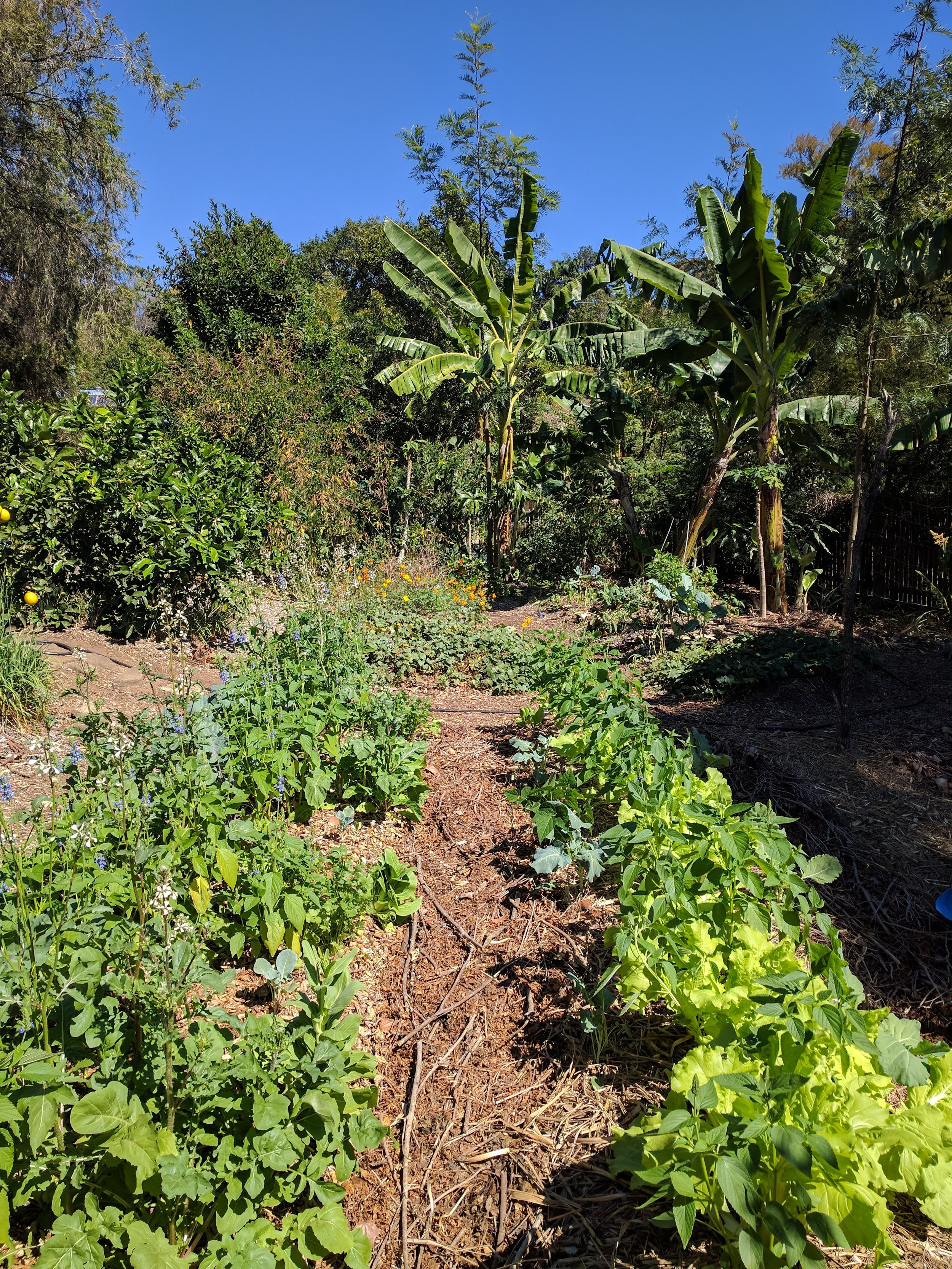 Syntropic Agriculture Farming Permaculture Design.jpg