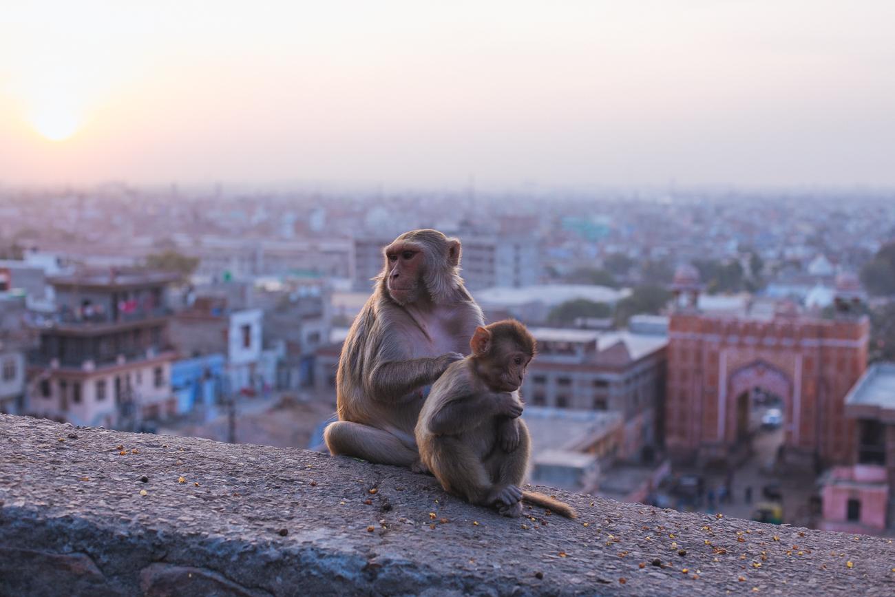 India-6947.jpg
