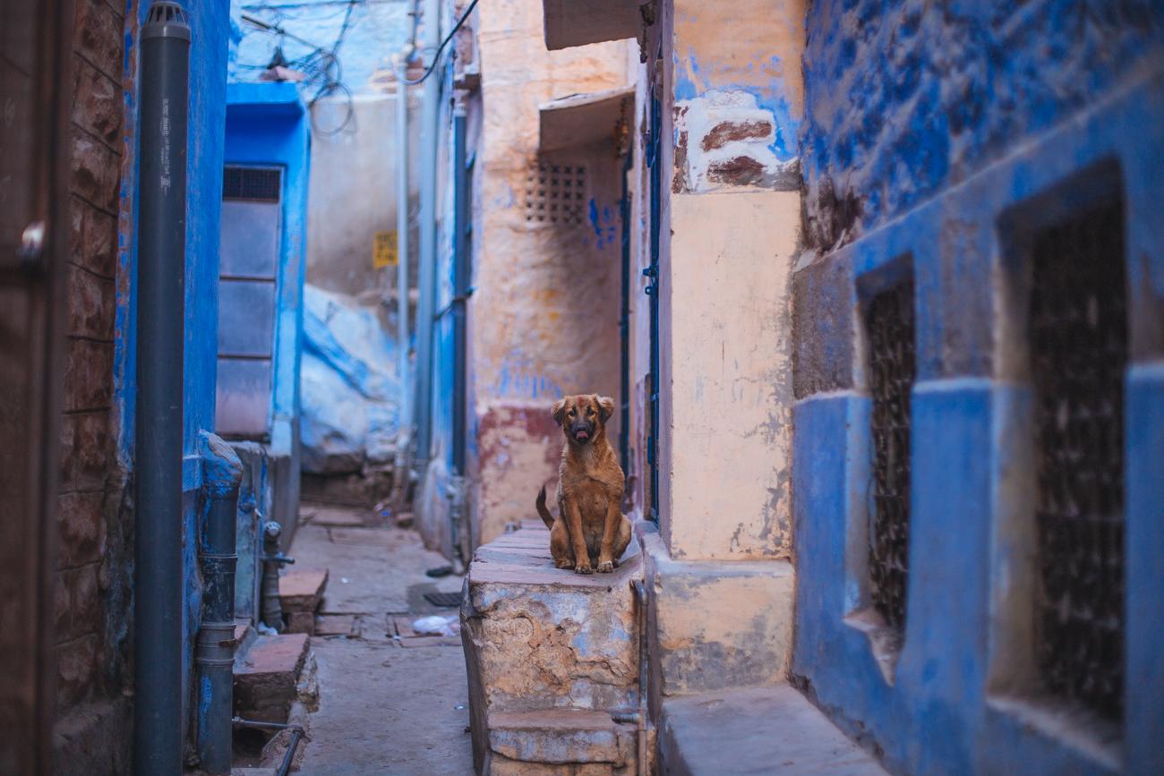 India-7040.jpg