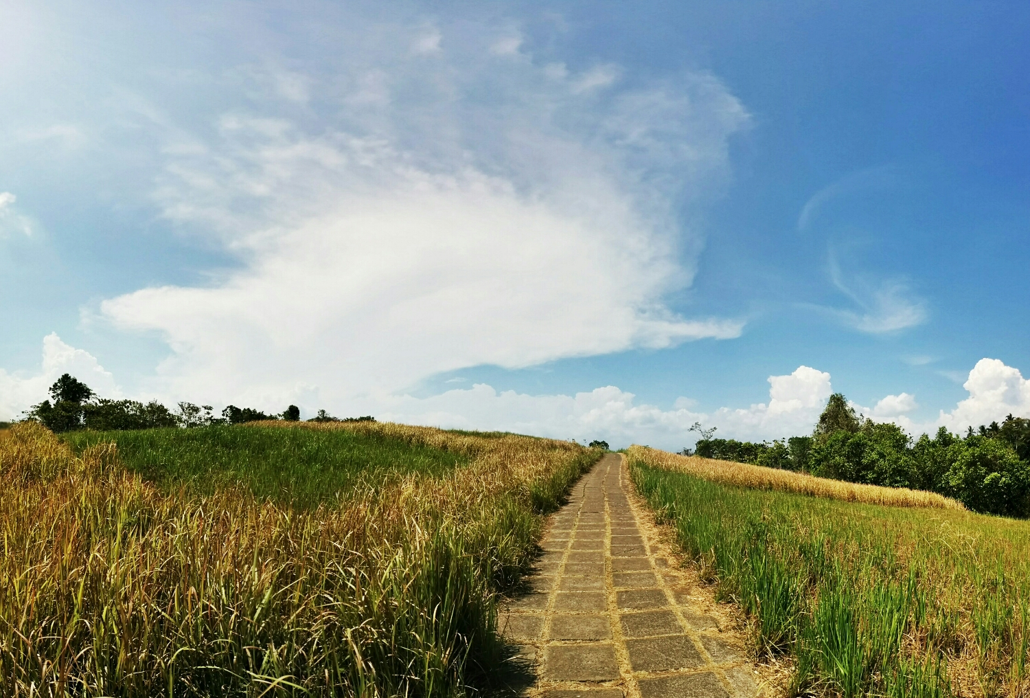 Ridge walk in Ubud, Bali. A nice walk with surprises waiting at the end of the walk.
