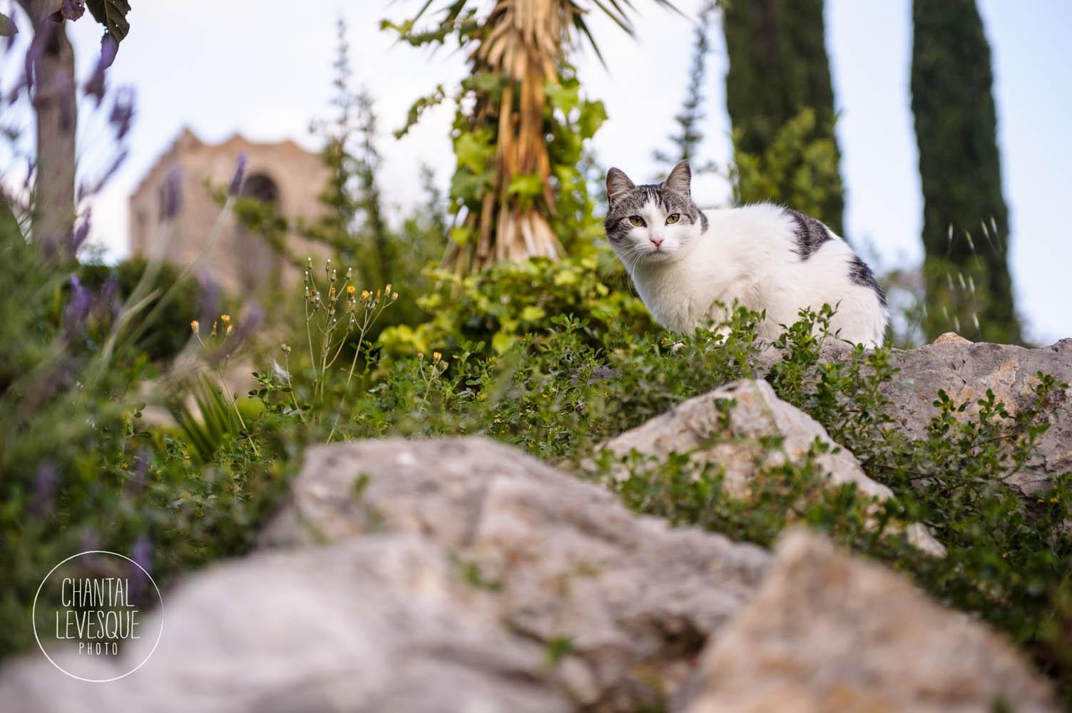 Un petit minou dans le village d'Olivella où se trouve la villa